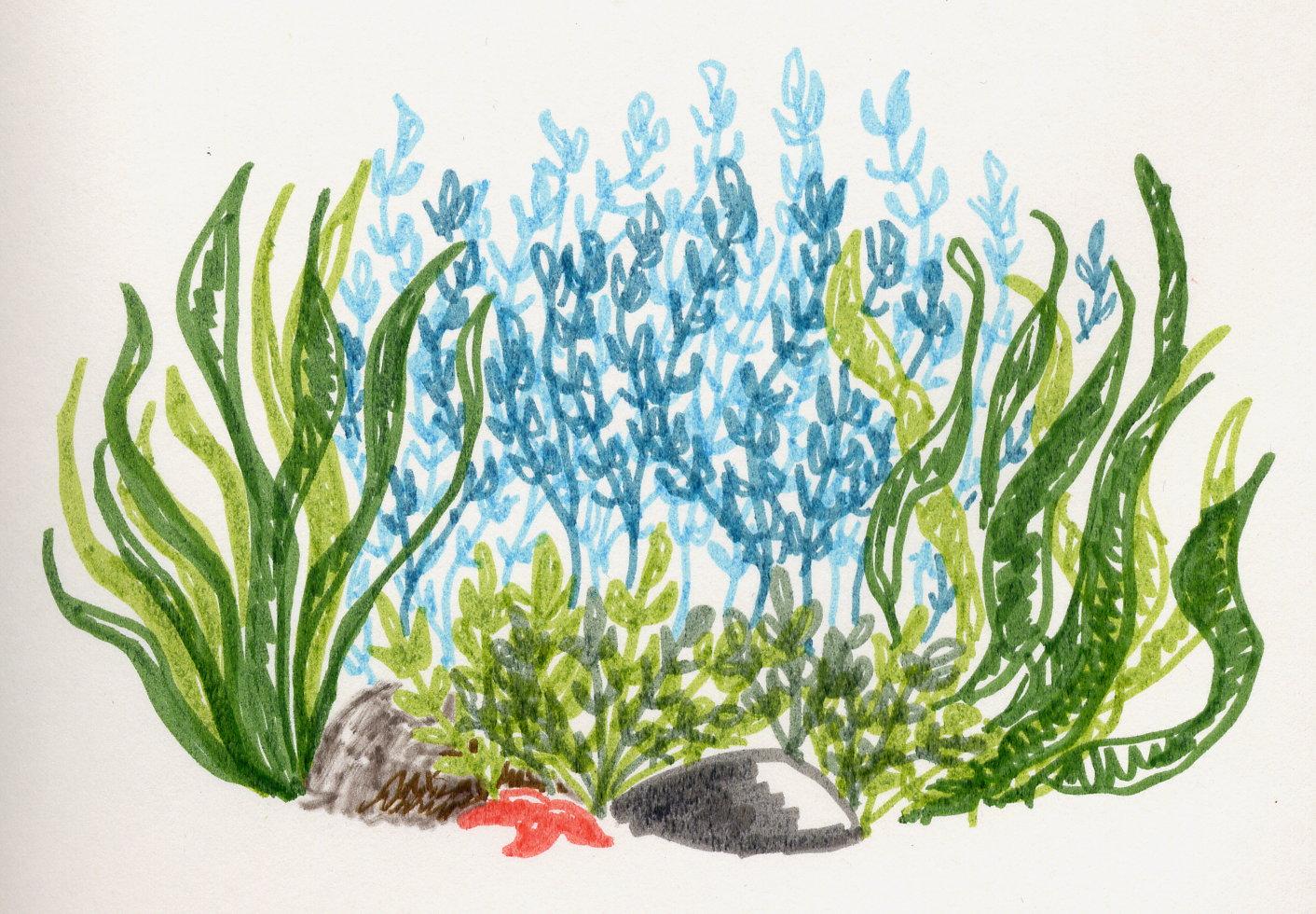 Les algues marines font vous faire chavirer ! 🍃